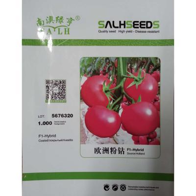 南澳绿亨 欧洲粉钻 番茄种子